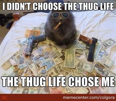 Internet Badass Meme - badass cat by colgora meme center