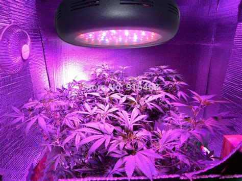 best light for growing plants indoors best led grow lights for indoor plants 28 images 1200w