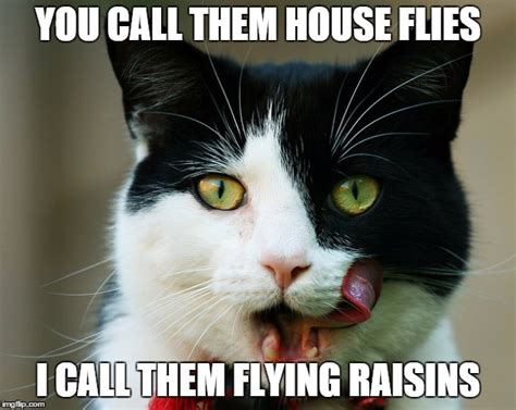 Flying Cat Meme - cats eat flying raisins imgflip
