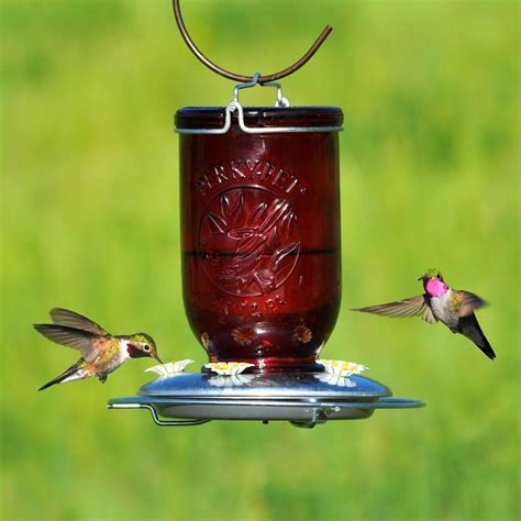 perky pet red mason jar glass hummingbird feeder