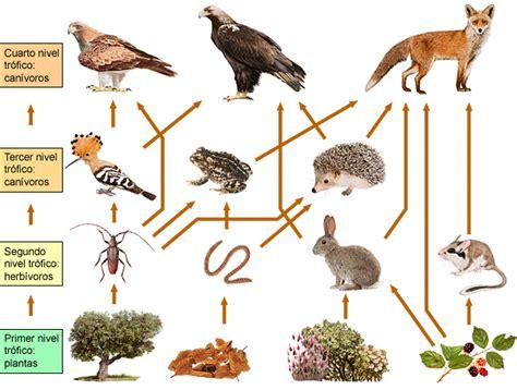 cadenas y redes y piramides alimenticias redes cadenas y piramides alimenticias geograf 205 a y