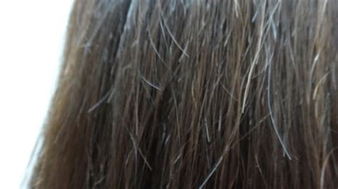hair breakage what causes hair breakage your beauty 411