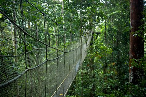 canopy amazon amazon canopy walkway amazon rainforest peru the canopy