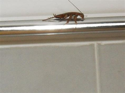 cockroaches in bathroom cockroach in bathroom picture of labranda aqua fun