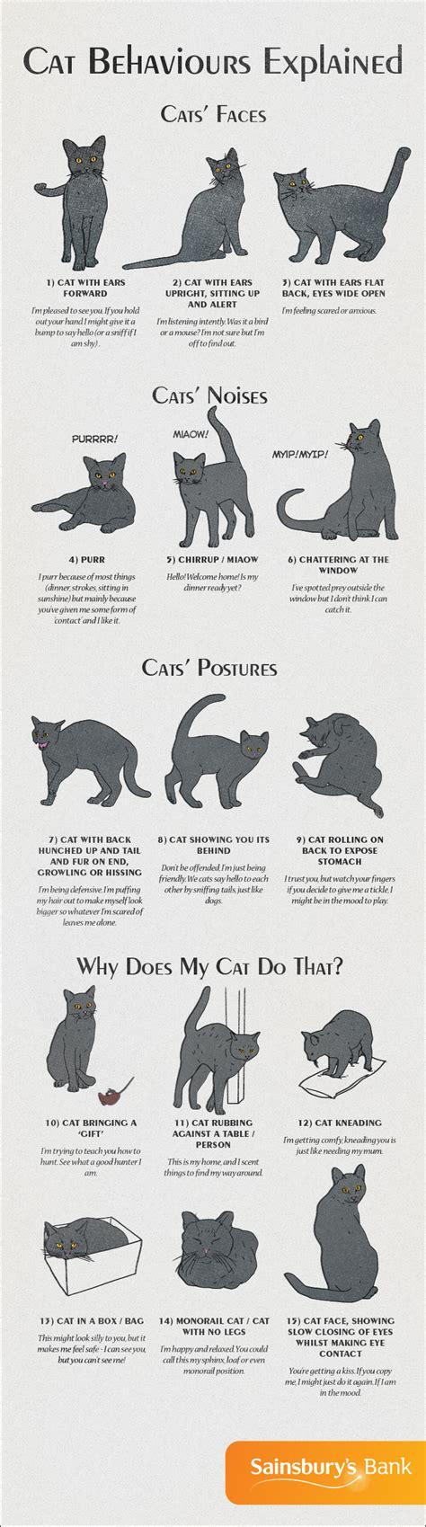 cat body language infographic images