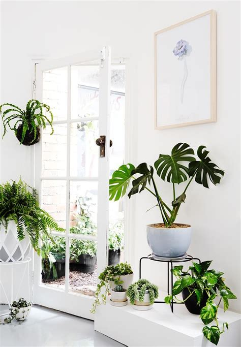 best small houseplants best 25 tropical house plants ideas on pinterest flowering house plants tropical garden and