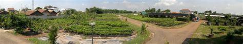 Bibit Jambu Air Karawang sri wijaya tani solusi belanja bibit tanaman di lahan 10
