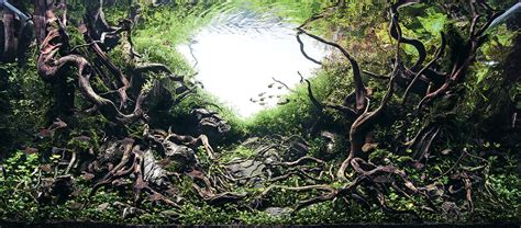 aquascaping search results colossal
