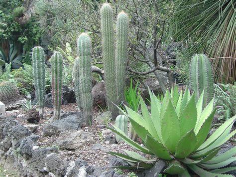 imagenes de jardines botánicos jard 237 n bot 225 nico unam me lo dijo lola