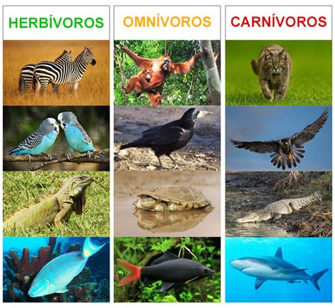 imagenes de animales herbivoros y carnivoros animales carnivoros herviboros omnivoros insectivoros imagui