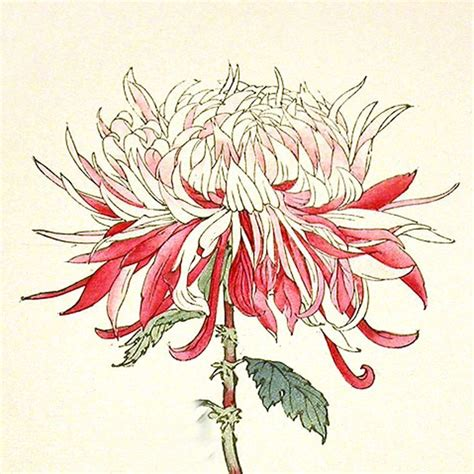 japanese art prints google search japanese art japanese woodblock print red flower google search