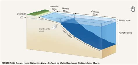 Continental Shelf Marine by Zones Honors Marine Biology With At Foley