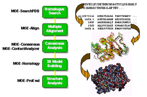 protein 3d modeling software 3d bioinformatics and comparative modeling in moe