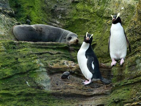 Traveller Pinguin country gourmet traveler antarctica penguins