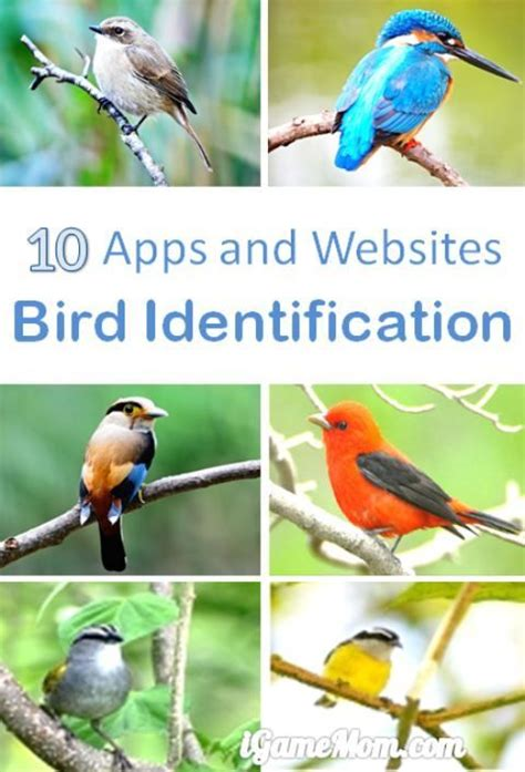 10 apps for bird identification songs colors and bird