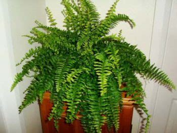 plants that need little sunlight indoor plants that need little sunlight page 3 of 8