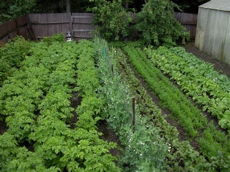Vegetable Garden In Inspiring Backyard Vegetable Garden With Various Plants