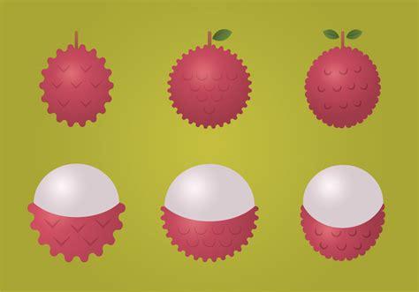 lychee vector illustration   vector art