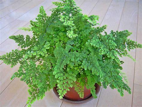 jenis tanaman hias hidroponik  bisa ditanam  rumah