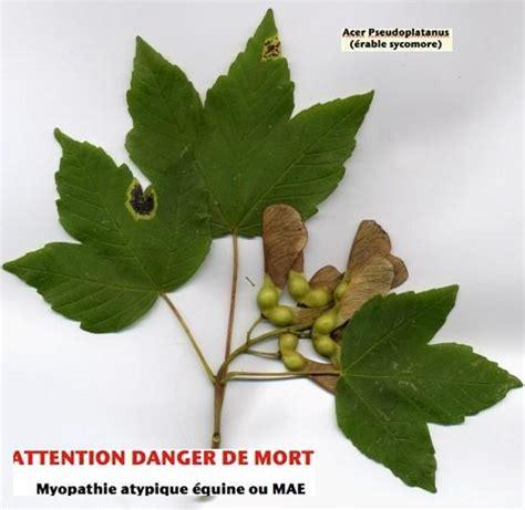 Liste Des Plantes Toxiques Pour Les Poules by Plantes Toxiques Pour Les Anes