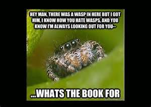Misunderstood Spider Meme - 10 images about happy spider memes on pinterest without