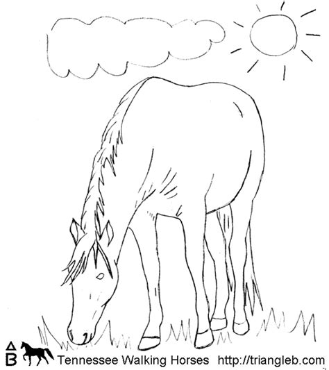 coloring pages of tennessee walking horses triangle b coloring tennessee walking horses 8