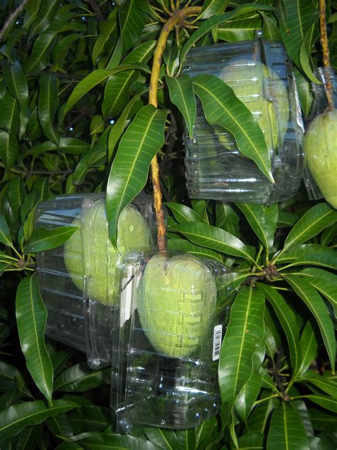 keep birds fruit trees how to keep squirrels and birds from your fruit