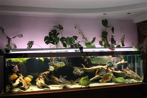 aquascape and new fish in the cichlid tank 1000 images about fish tank planter on