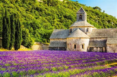 stassen fiori lavendelvelden in de provence holidayguru nl