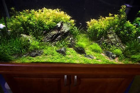 planted aquarium aquascape aquascapes