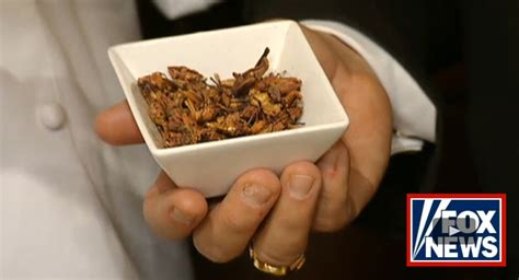 Would You Eat This Grasshopper Snack by Grasshoppers Medicine