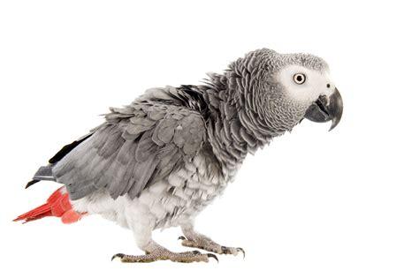 L Oiseau les intoxications chez l oiseau doctissimo