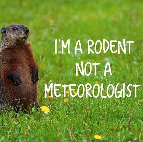 groundhog day 2016 groundhog day 2016 best memes heavy page 5