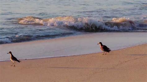 en la orilla 8433978012 3743 aves en la orilla del mar efecto animales y naturaleza youtube
