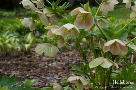 best shade plants flowering shade perennials year after year easy