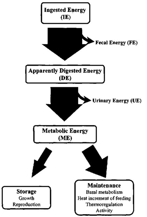 energy pattern flow energetics marine mammals