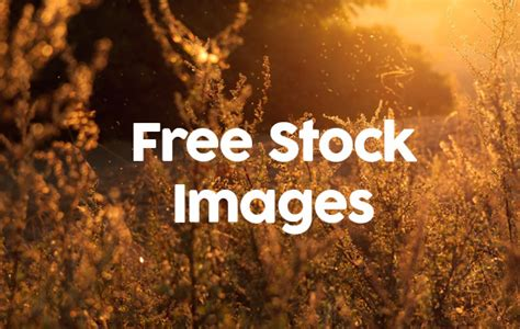 free use images 6 free commercial use stock photography images free