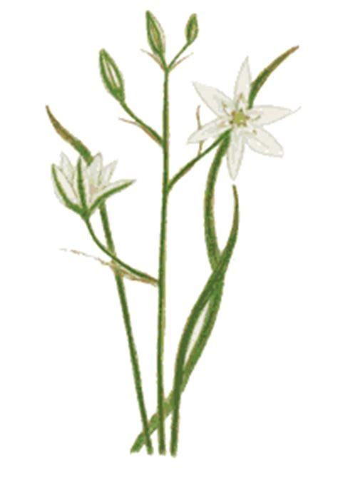 fiori di bach of bethlehem anima i fiori di bach