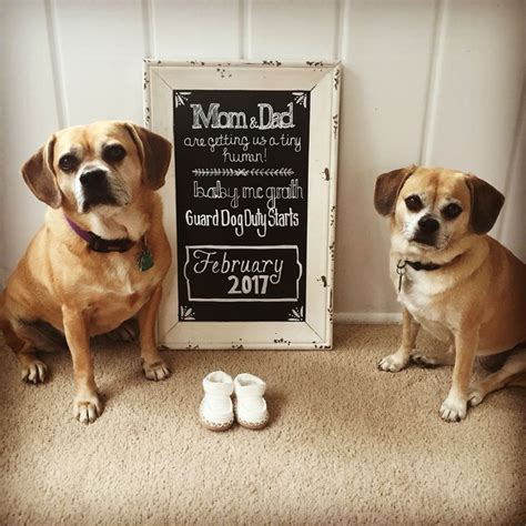 baby announcements with dogs baby announcement with dogs guard duty creative baby announcement chalkboard