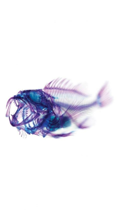 iphone 6s fish wallpapers 75 images
