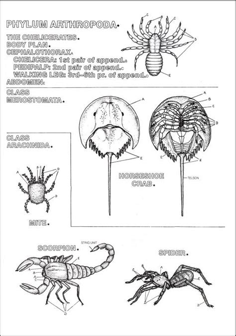 Zoology Coloring Book 004696 Images Rainbow Resource