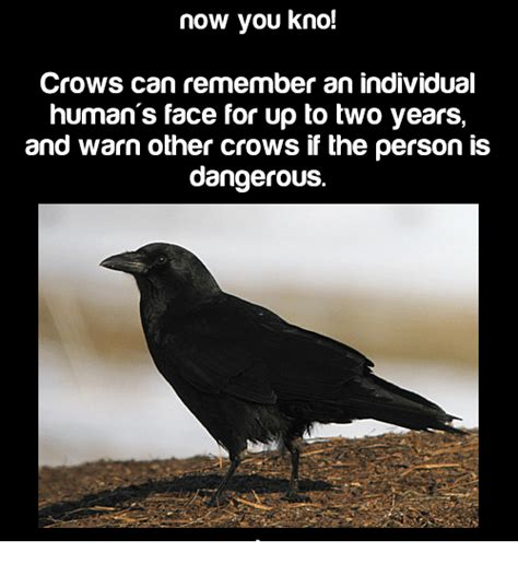 Crow Meme - crow face human www imgkid com the image kid has it