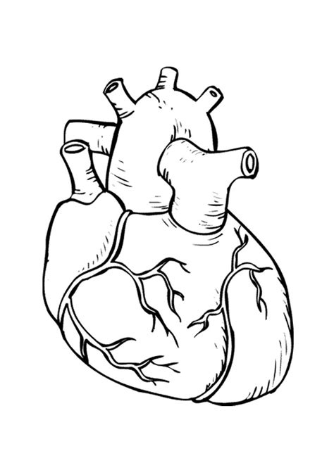 Realistic Heart Coloring Page | realistic heart coloring pages