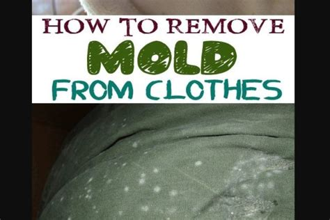 how to get mold out of clothes how to get mold out of clothes step by step guide
