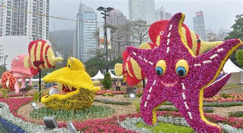 new year flower show when blossoms in hong kong flower show 2015