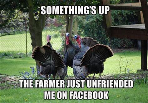Funny Turkey Memes - a funny turkey pictures dump a day