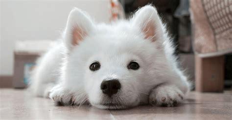 cute dog names  girl  boy dogs