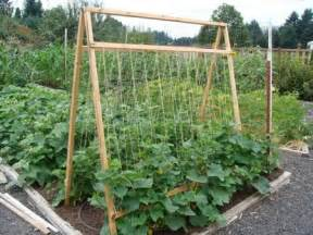 best cucumber trellis five reasons to grow cucumbers on a trellis and taking up