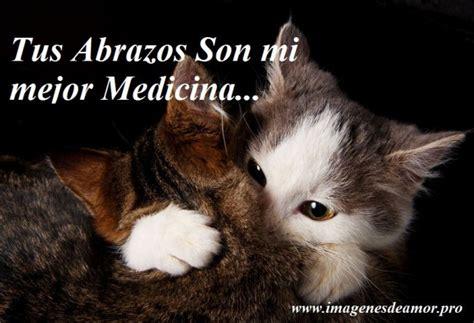 imagenes wasap gatos im 225 genes de gatitos con frases cortas bonitas para