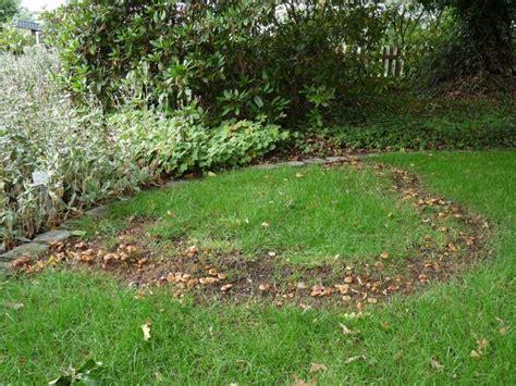 Pilze Im Garten Rasen by Pilze Im Rasen Rasenkrankheiten Bek 228 Mpfen Mein Sch 246 Ner